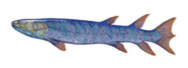 陸を歩く魚!エウステノプテロン